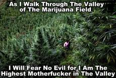 As I walk through the valley of the marijuana field