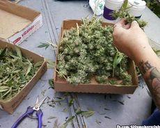 box of buds