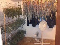 hanging the buds
