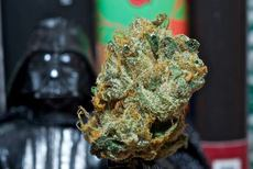 darth bud