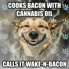 cooks bacon with cannabis oil