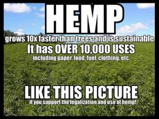 Hemp grows 10x faster than trees