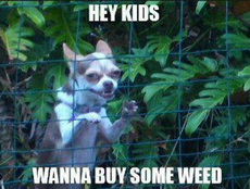 hey kids wanna buy some weed?