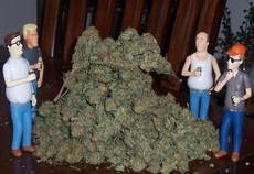 King of the bud hill