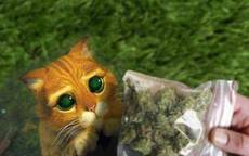 weed for kitty